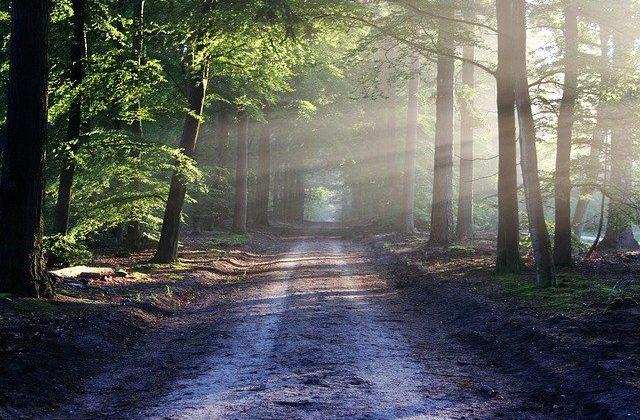 vii-jornadas-imagen-bosque-640